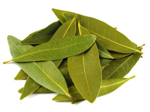 bay leaf, лавровый лист